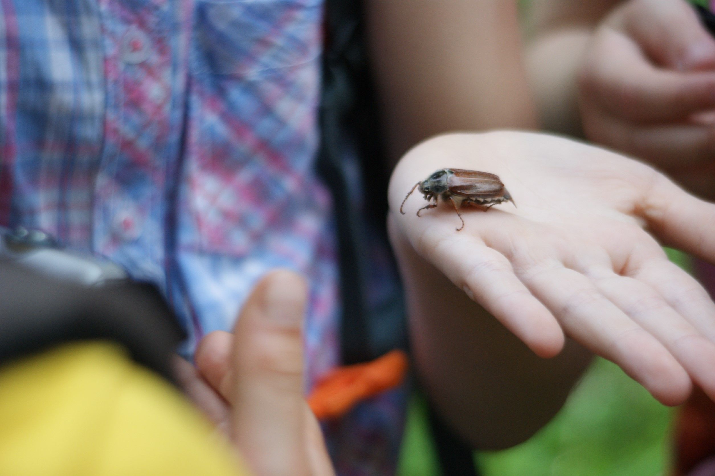 Ein Käfer sitzt auf der Hand eines Kindes